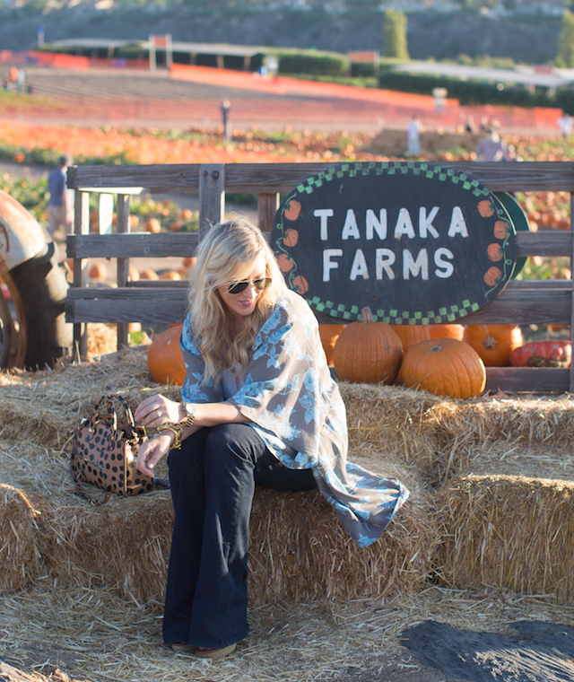 tanaka farms pumpkin patch