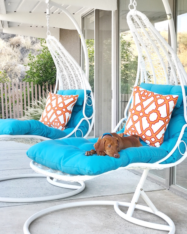 Most comfortable hammock swing chairs + Vizsla puppy