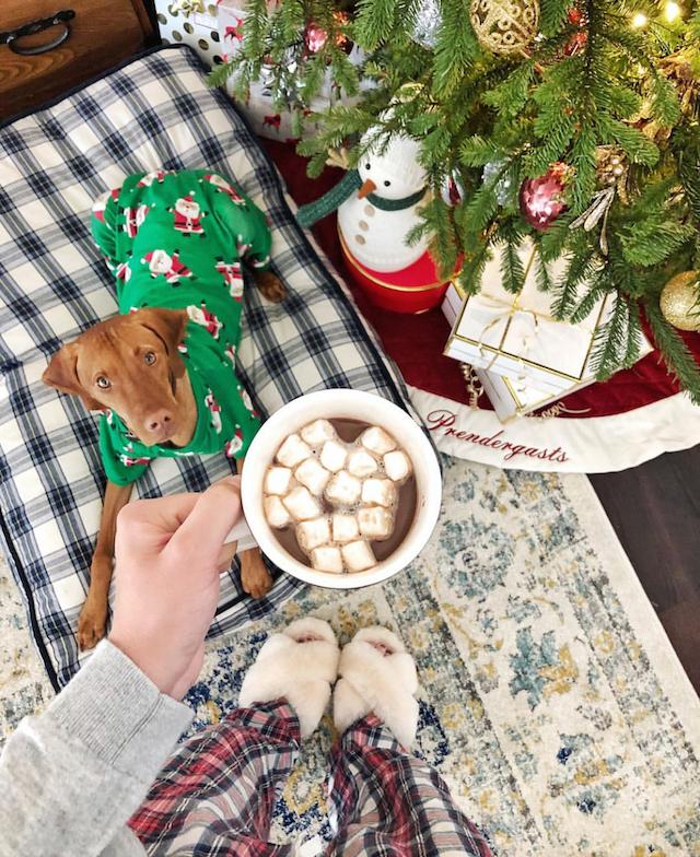 Vizsla puppy in Christmas pajamas