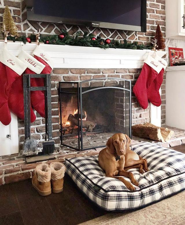 Vizsla puppy by fireplace | #LouisetheViz
