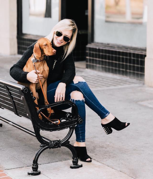 #LouisetheViz | Vizsla puppy