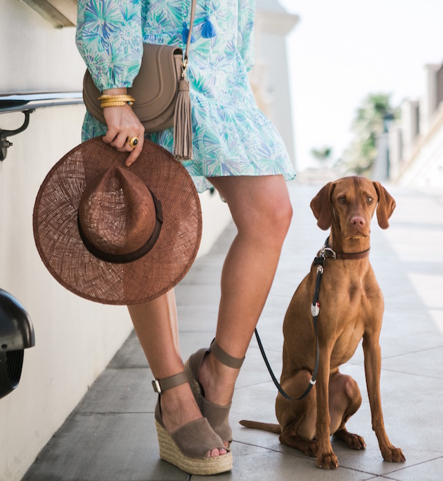 Vizsla puppy | Hyatt Regency Huntington Beach