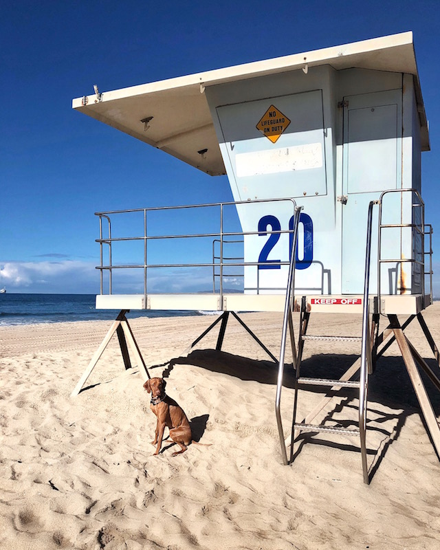 Lifeguard tower in Huntington Beach, CA