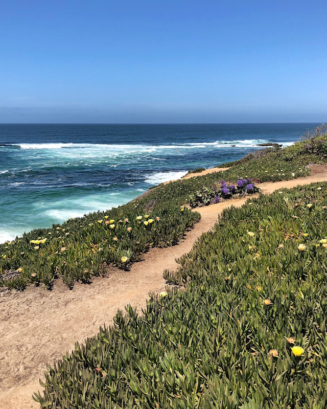 View from The Cove La Jolla | My Style Diaries